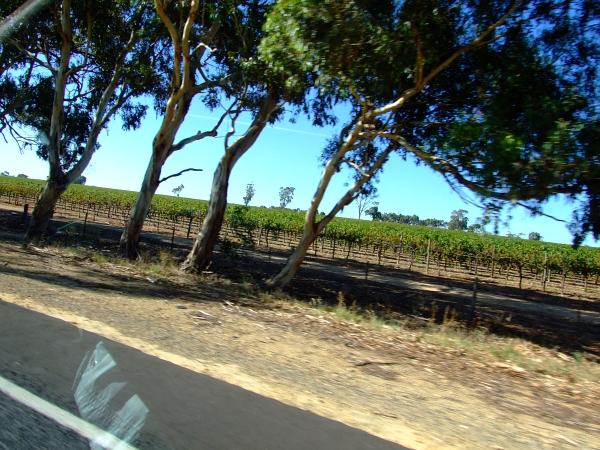 more vines