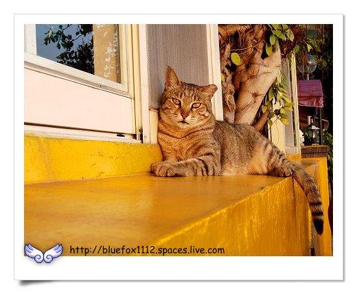 090322淡水河堤餐廳的貓
