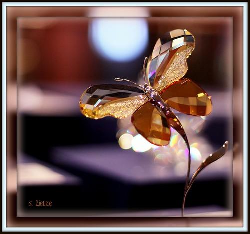 Butterfly Bokeh Vapor Trail