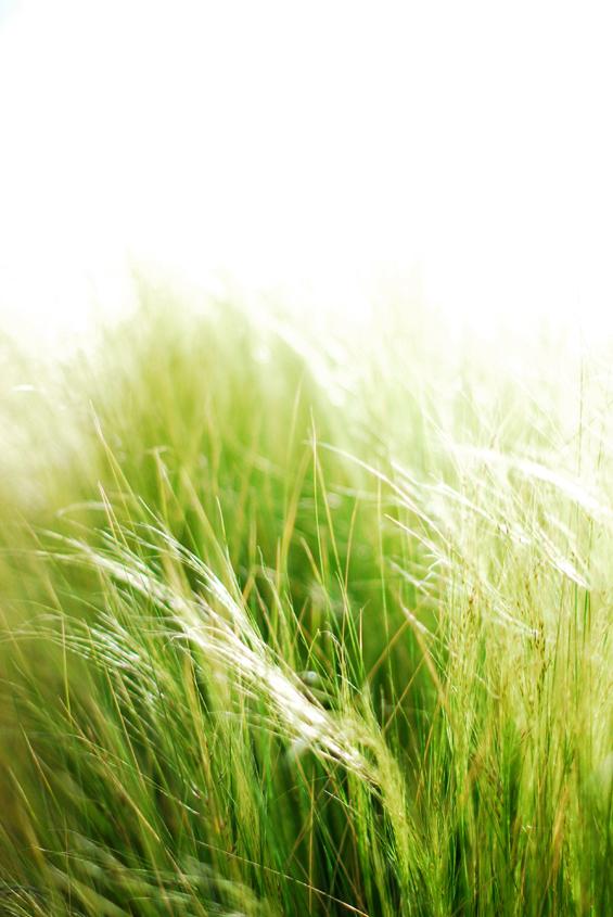 grass 02