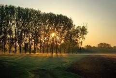 Nebel Stimmung (KSTUDI) Tags: nature germany landscape deutschland licht natur hannover landschaft sonnenaufgang morgen niedersachsen leinemasch nebelstimmung