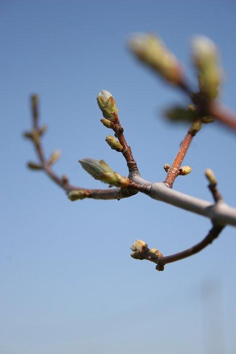 04-23-tree3