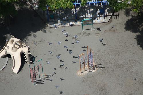 公園に飛来するハトの群