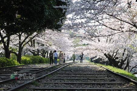 京都‧蹴上