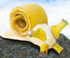 Meet Gary... (RєRє) Tags: food playing silly art goofy stone fun funny with humor snail banana spongebob gary p banane peel escargot schnecke caracol mollusk anthropomorphic playingwithfood muz banano salyangoz anthropomorph antropomórfico snana antropomorfico anthropomorphe yepimabigfanof andgaryrules onthatcartoon brincandocomacomidablog