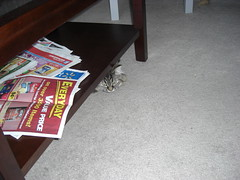 Danya watching from under the coffee table