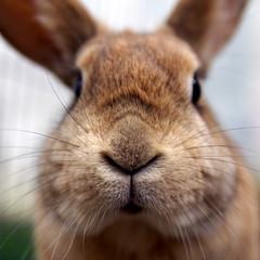 Bunny update: Pip (Sjaek) Tags: