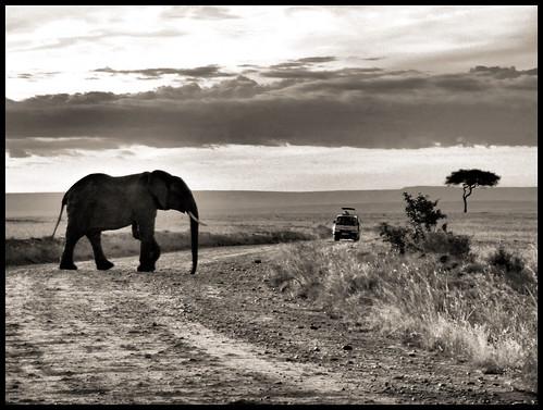 Sunset at  Masai Mara