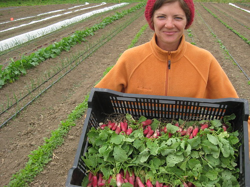 First Harvest: Mir with Radishes
