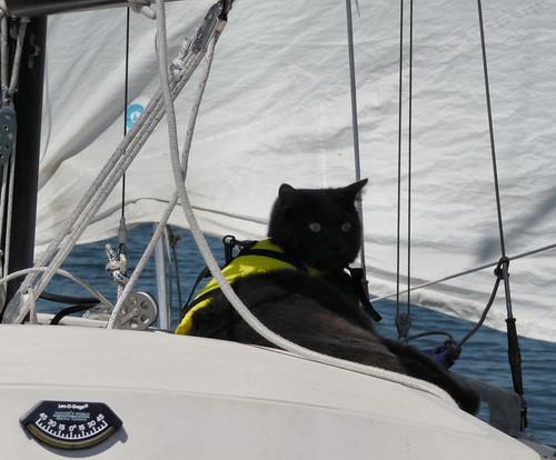 Dax on deck