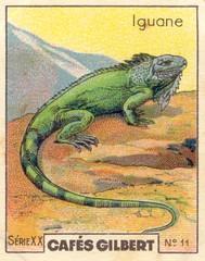 gilbert reptile 11