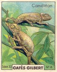 gilbert reptile 8