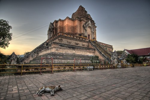 Dog at Wat Chedi Luang