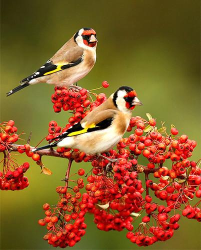 3811257014 2df1fb66d9 Beautiful Birds   The Splash of Colors!!!