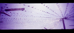 on the edge of safe (QsySue) Tags: blue sky purple toycamera flags slidefilm pole 35mmfilm orangecounty cardealership huntingtonbeach expiredfilm anscopixpanorama flippedlens kodakelitechrome anscopanoramicpix titleisategansaralyric