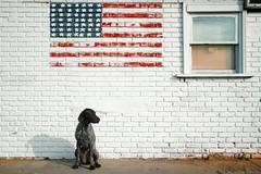 2011:05:30__08:17:17 (MilkaWay) Tags: georgia mural americanflag birddog athens tessa gsp starsandstripes memorialday 2yearsold day150 germanshorthairedpointer 2011 clarkecounty