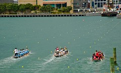 Dragon Boat Racing (Bernzfotos - Bernard Golder Photography) Tags: newzealand sport concentration movement nikon competition nz wellington nikkor losers winners d300 nouvellezlande wellingtoncity wellingtonnz nikond300 nikkorvr18105mmf35 bernzfotos