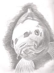 lekkerbekje (hoh1983) Tags: fish drawing koi carp karper