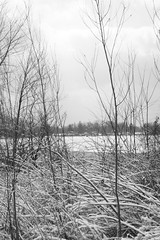 cold shot of the lake (Smiles In Rearview Mirrors) Tags: trees winter blackandwhite lake snow cold nature water frozen sticks