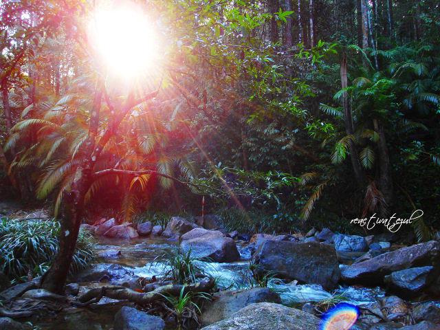 cahaya-matahari-menyusup-di-celah2-pokok