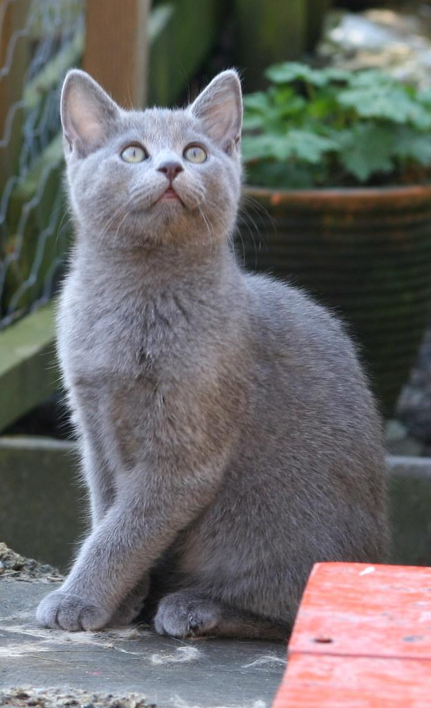 Kittens of Pegusha - Page 3 3373215145_583a5cff9e_b