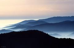 Mer de brouillard dans le Massif des Vosges (Philippe_28) Tags: fog landscapes nikon nebel paysage brouillard vosges seaofclouds nebelmeer artofimages bestcapturesaoi