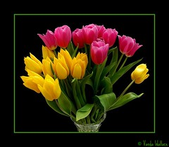 Mothers Day Tulips (Vanda's Pictures) Tags: pink flowers yellow petals thankyou tulips vanda mothersday excellence worldbest vosplusbellesphotos