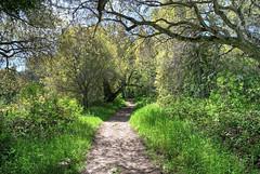 Happy Path (Mark.R.M) Tags: california park trees green grass woods garland trail carmel montereycounty hdr photomatix