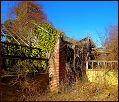 "Devastation!  Beyond the walled garden... (""alley cat photography') Tags: wild abandoned nature neglect decay longisland greenhouses reclaimation huntingtonny beyondrepair caumsettstatehistoricpark"