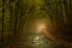 Storm Remnants ( D L Ennis) Tags: trees mist rain misty foggy covered moved through roads backroads overnight countryroads densefog strongwind dlennis stormremnants dawnawoke leavesandlimbs