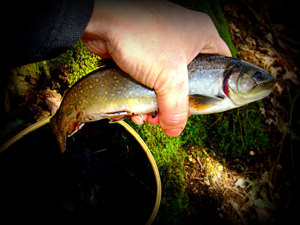 The world 39 s best photos of brook and brookie flickr hive for Best trout fishing in pa