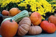 harvest time at Findlay Market (by: Ken Stigler, creative commons license)