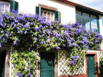 20090425-rq-Quinta Jardins do Lago-2 Petrea volubilis