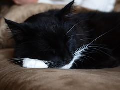 Rascal B. (martyandmaggie) Tags: catnipaddicts