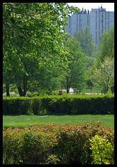 Katowice - miasto kopal (pawel_n) Tags: city primavera spring ciudad april katowice wiosna miasto kwiecie