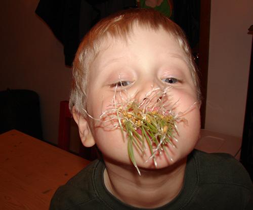 Wheatgrass Cthulhu