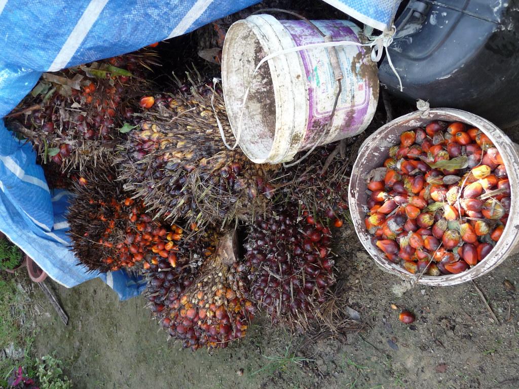 Palm Oil (10)
