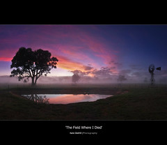 The Field Where I Died ([ Kane ]) Tags: pink blue tree green water windmill fog reflections dawn pond farm australia explore nsw qld queensland kane gress gledhill kanegledhill vosplusbellesphotos kanegledhillphotography