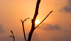 Peek (Rakesh Vimalnath) Tags: sunset clouds season dusk harvest irinjalakuda punjapaadam