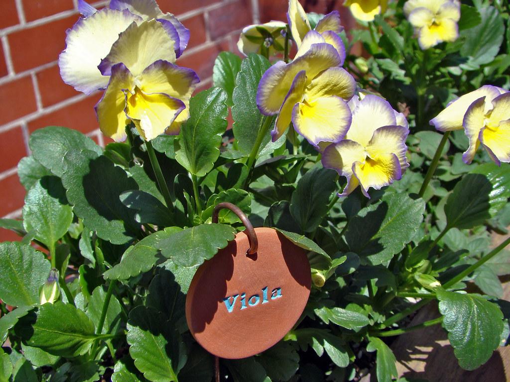 DSC05718 Viola tag
