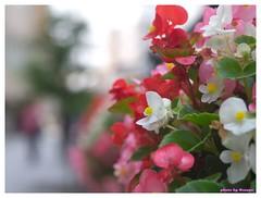 Horikawa Flower Festival 20090327 #11