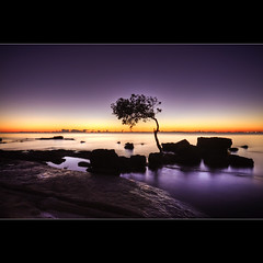 Morning Has Broken ([ Kane ]) Tags: winter sea sun tree water sunrise dawn mud australia brisbane qld queensland kane mangroves hdr gledhill kanegledhill kanegledhillphotography