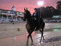 Pink sky at night is a saddlebred's delight. (Jen MacNeill) Tags: english riding devon equestrian macneill devonhorseshow gypsymarestudios jennifermacneilltraylor