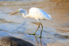 Yep I got my dinner ! (AgniMax) Tags: blue sunset fish reflection bird beach nature water animal closeup standing reflections outdoors photography leaf fishing day wildlife fulllength nopeople swamp sideview kovalam bluemonday oneanimal colorimage ruralscene catchingfish beautyinnature animalthemes heronfamily heroninbeach