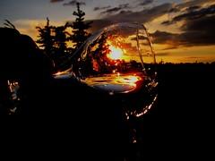 A tipsy sunset moment (peggyhr) Tags: blue friends sunset sky orange sun canada black clouds reflections edmonton dof darkness silhouettes explore alberta wineglass photocompetition sprucetrees anawesomeshot aplusphoto globalvillage2 peggyhr aphotos sunbestsunphotos justfordream explorewinnersoftheworld photosofqualitytosmileabout flickrsmasterpieces themasterofmasterpieces applaudingtalentaroundtheworld 2936a katedaysphotocompetition