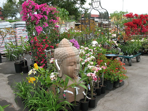 plumeria, bougainvillea, garden statue, arbor