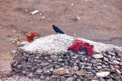 烏鴉在藏族中是能預卜吉凶的報知鳥