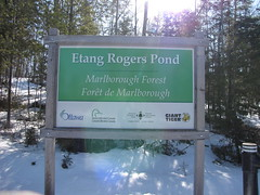 Rogers Pond, Marlborough Forest
