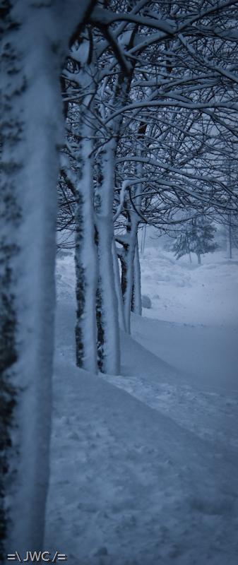Bloody snow...