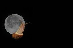 encaramado a la luna